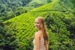 Turista das mulheres em uma plantação de chá As folhas de chá selecionadas, frescas naturais no chá cultivam em Cameron Highlands imagens de stock royalty free