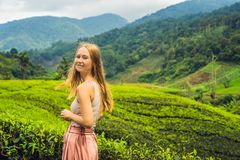 Turista das mulheres em uma plantação de chá As folhas de chá selecionadas, frescas naturais no chá cultivam em Cameron Highlands fotos de stock
