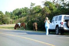Turista de Assateague que toma fotos do cavalo selvagem foto de stock