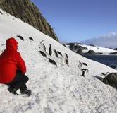 Turista de la aventura - pingüinos - Ant3artida Imagen de archivo