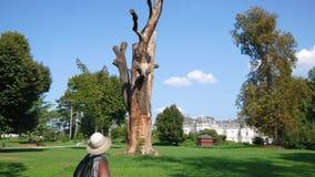 Turista de la mujer que mira un árbol enorme secado almacen de metraje de vídeo
