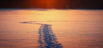 Turista del rastro del invierno en un campo nevado Fotografía de archivo
