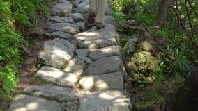 Turista della donna che cammina su una strada di pietra nel parco archivi video