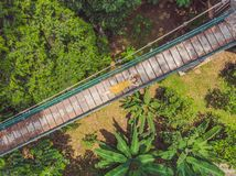 Turista della giovane donna alla vista areial del eco-parco della foresta di Kuala Lumpur del ponte sospeso di capilano fotografie stock libere da diritti
