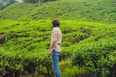 Turista dos homens em uma plantação de chá As folhas de chá selecionadas, frescas naturais no chá cultivam em Cameron Highlands,  imagens de stock