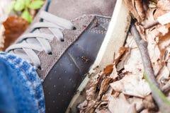 Turista e formigas Imagem de Stock