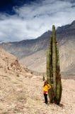 Turista em trekking no Peru foto de stock royalty free