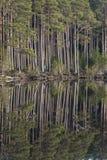Turista en bosque en el lago Mallachie en las montañas de Escocia Imagenes de archivo