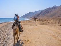 Turista en camellos en Egipto Imágenes de archivo libres de regalías