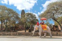 Turista en el elefante que hace turismo en el parque histórico de Ayutthaya, Ay Imagen de archivo libre de regalías