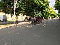 Turista en un carro del caballo Fotos de archivo libres de regalías