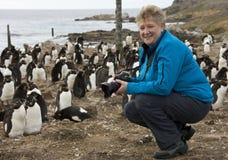 Turista en una colonia del pingüino de Rockhopper en Falkland Islands Fotos de archivo libres de regalías