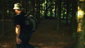 Turista maschio con uno zaino che passa la fucilazione della foresta dalla parte posteriore stock footage