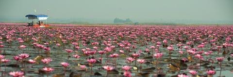 Turista no lírio de água cor-de-rosa no lago, Tailândia Imagens de Stock Royalty Free