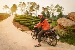 Turista no velomotor perto das plantações de chá, Vietname Imagem de Stock