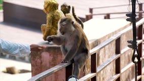 Turista que alimenta um macaco vídeos de arquivo