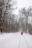 Turista que anda sozinho na floresta do inverno imagens de stock royalty free
