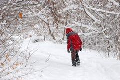 Turista que anda sozinho na floresta do inverno foto de stock