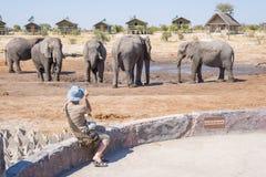 Turista que fotografa elefantes com o smartphone, muito próximo ao rebanho Aventura e safari dos animais selvagens em África Viag Fotos de Stock