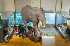 Turista que visita el museo de ciencia nacional Foto de archivo libre de regalías