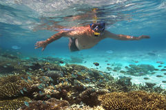 Turista snokelling en un filón coralino - Maldives imagen de archivo