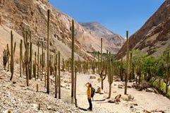 Turista su trekking nel Perù Fotografie Stock Libere da Diritti