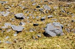 Turista su trekking nel Perù Immagine Stock