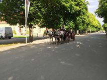 Turista su un carretto del cavallo Fotografie Stock Libere da Diritti