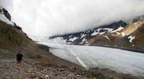 Turista sul ghiacciaio di Athabasca Immagine Stock