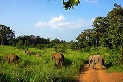 Turistas das boas vindas dos elefantes imagens de stock
