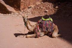 Turistas de espera do dromedário Fotografia de Stock Royalty Free