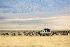 Turistas do safari na movimentação do jogo em Ngorongoro fotografia de stock