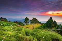 Turistas e flores bonitas de Huay Nam Dung Nation Park na manhã de Twilght, Chiangmai, Tailândia Foto de Stock