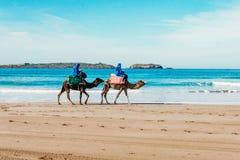 Turistas em camelos na praia Turismo em Marrocos, Argélia, Tunísia conceito do curso fotografia de stock
