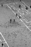 Turistas em pombos da alimentação do quadrado de San Marco foto de stock royalty free