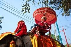 Turistas em um passeio elefant foto de stock