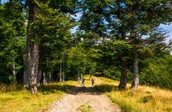Turistas em uma estrada de terra através da floresta da faia foto de stock royalty free