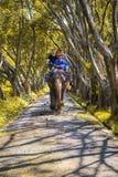 Turistas em uma excursão do passeio do elefante fotos de stock royalty free