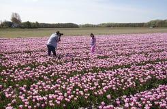 Turistas en flowerfield Fotos de archivo