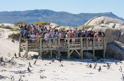 Turistas en la colonia del pingüino de los cantos rodados, Simonstown Imagen de archivo libre de regalías