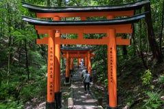 Turistas en la pista de senderismo cubierta por las puertas del torii Foto de archivo libre de regalías