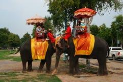 Turistas en un paseo elefant alrededor del parque en Ayutthaya, Thailan Imágenes de archivo libres de regalías