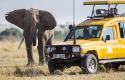 Turistas en un safari en un vehículo especial que miran un elefante Fotografía de archivo libre de regalías