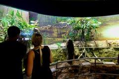 Turistas no aquário - Barcelona, Espanha Imagens de Stock Royalty Free