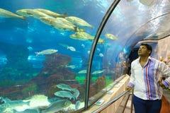 Turistas no aquário - Barcelona, Espanha Fotografia de Stock
