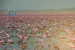 Turistas no lírio de água cor-de-rosa no lago, Tailândia Imagem de Stock
