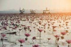 Turistas no lírio de água cor-de-rosa no lago, Tailândia Foto de Stock