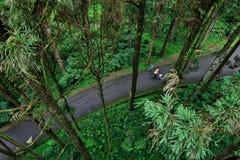Turistas que andam na floresta imagem de stock