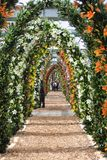 Turistas que andam no fim da maneira bonita do arco de flores do lírio no tempo de mola no jardim de Keukenhof fotos de stock