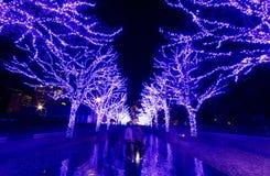 Turistas que apreciam o cenário bonito da exposição da iluminação do inverno pelo Natal & o ano novo, fotografia de stock royalty free